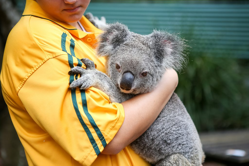 Learn about Australia's native animals, conservation efforts, and environmental habitats.
