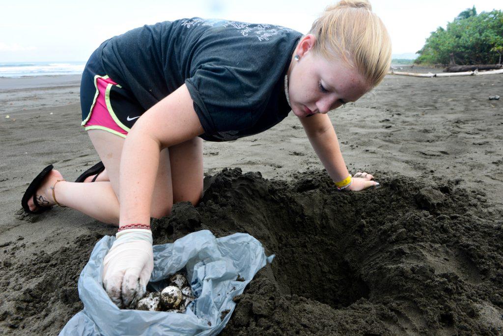 Rustic student gathering sea turtle eggs/