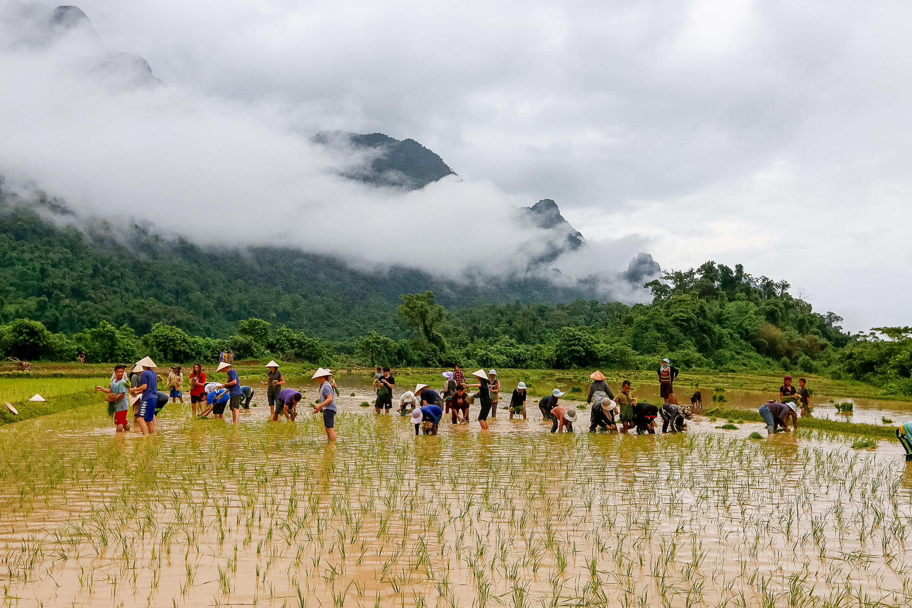 assisting farmers with rice production with Rustic Pathways in Laos